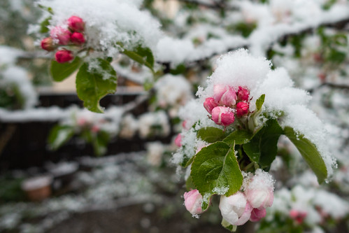 Winter am 5.5.19 (4)