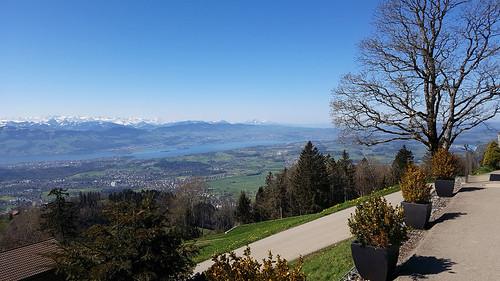 Ausblick auf Alpen und Zürichsee vom Bachtel (1115 m.ü.M.)