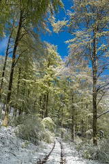 Neige de printemps - Photo of Breitenbach