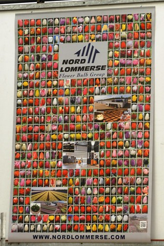 Poster of Tulip Types, Munster Flowers, Slootdorp, Netherlands