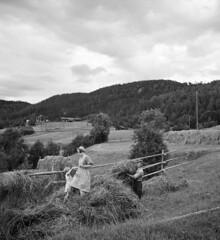 Farm work in Sillre, Liden, Medelpad, Sweden