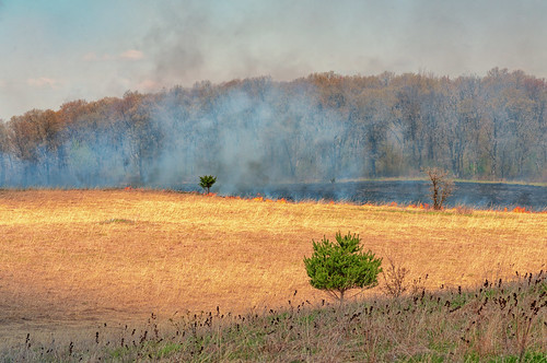 Controlled Burn Fire at Wild River State Park