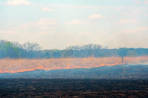 Prescribed Burn at Wild River State Park, Minnesota