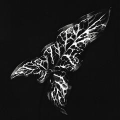 Leaf - Photo of Herbeville
