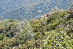 Mt Umunhum chaparal_super_tight_DSC_0120