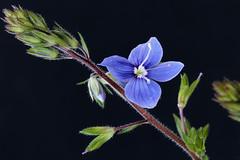 Macro fleur_IMG_2082