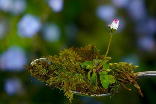 Flower panorama