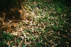 Dead leaves on the ground