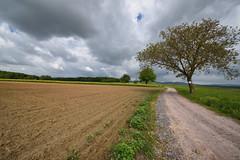 Chemin campagnard - Photo of Oberrœdern