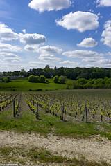 Pouilly-sur-Loire - Photo of Pouilly-sur-Loire