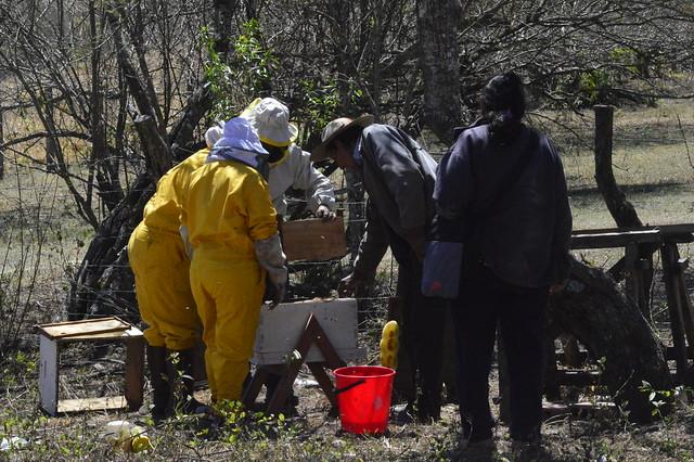 Productores de miel Tarija-Bolivia
