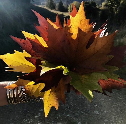 Ronel Autumn Maitai