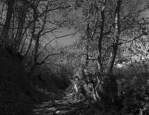 La Hiruela, camino de las carboneras.