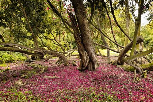 magnolia floor