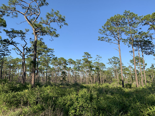 5-17-19_IMG_2500_pine-forest