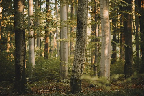 Forest #783