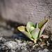 Plant in Wall, Huai Khwang Photo Walk #81