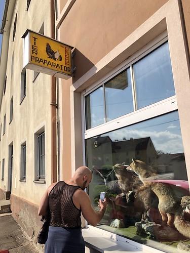 Alejandro photographs taxidermy shop window, Heberplatzl, Bruck an der Mur, Austria