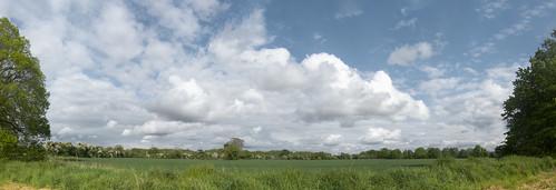 hawthorn hedges at Castletown