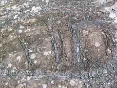 Peridotite & serpentinite (Upper Komatiitic Unit, Kidd-Munro Assemblage, Neoarchean, 2.711-2.717 Ga; southwest of the Potter Mine, east of Timmins, Ontario, Canada) 13