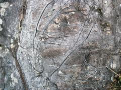 Peridotite & serpentinite (Upper Komatiitic Unit, Kidd-Munro Assemblage, Neoarchean, 2.711-2.717 Ga; southwest of the Potter Mine, east of Timmins, Ontario, Canada) 12