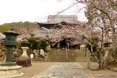 Kokawa-dera, Hondo (Main Hall) -1, (April 2019)