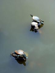 Turtle & Turtle