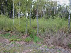 Soccer Roots, Askim, Indre Østfold, Norway