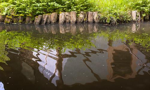 le miroir de l'eau d'un étang