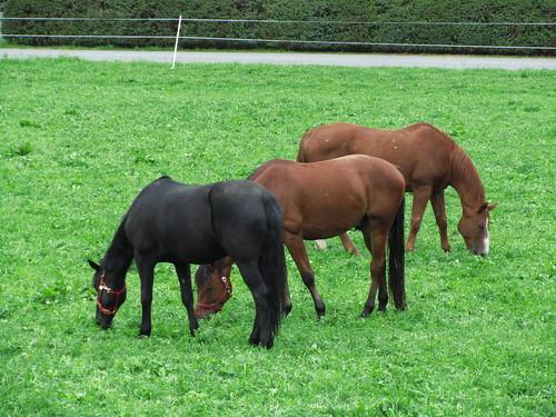 20110907 22 136 Jakobus Wiese Weide Pferde