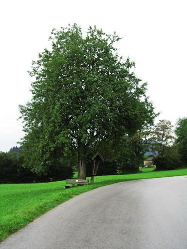 20110908 23 076 Jakobus Weg Baum Kreuz