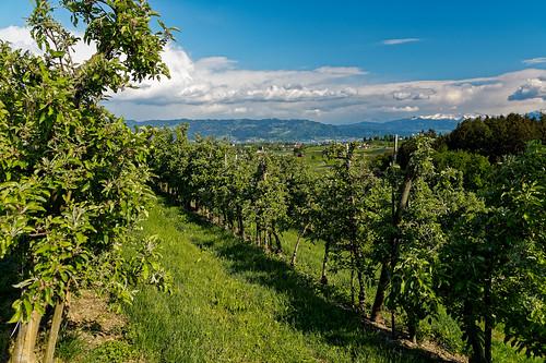 View from Taubenberg towards Lindau
