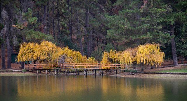 #otoño #fall #amarillo #yellow #sierra #chile #reflejos #reflexions #bridge #puente #laguna