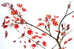 Spring Lightness - Photo of Carlepont