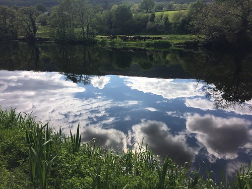 River Barrow Walk