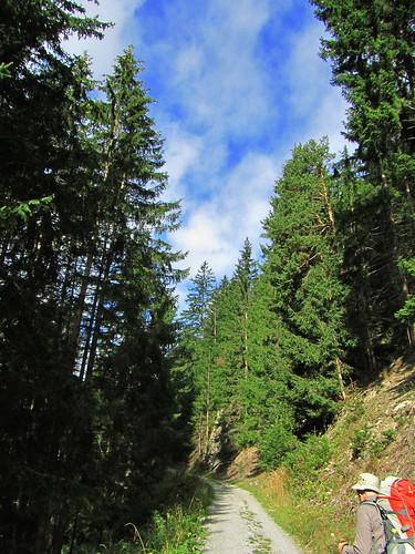 20110915 30 194 Jakobus Wald Weg Pilger Christine