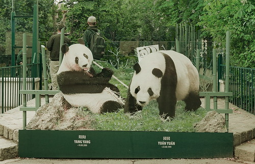 #goodpandacontest - flickr panda meeting Yang Yang and Yuán Yuán, the pandas at the Zoo Tiergarten Schönbrunn