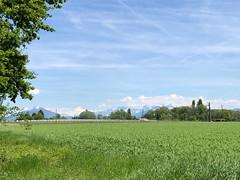 Vue sur le Mont Blanc (Puplinge, Genève, Suisse)