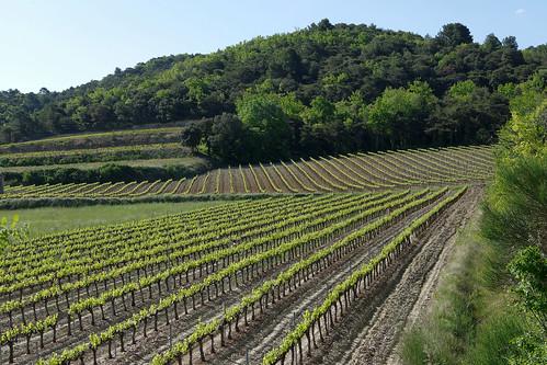 Graphisme viticole