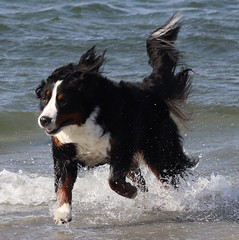 Morty having fun at Kye Bay