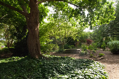 J.C. Raulston - Shade Garden (3)