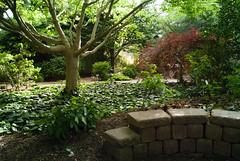 J.C. Raulston - Shade Garden (2)