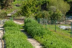 Carinthia Botanical Garden 10
