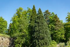 Carinthia Botanical Garden 6