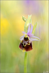Orchidee 2018-2019