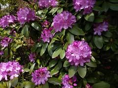 Spring in Queens
