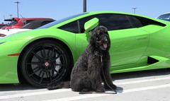 Benni loves a Lamborghini