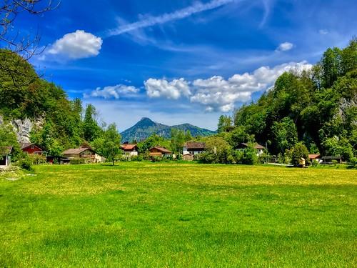 Meadow with dandelions near Oberaudorf in Bavaria, Germany