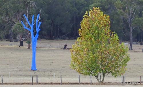 The blue RUOK Tree