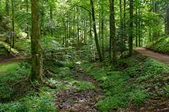 La forêt autour Oberhaslach
